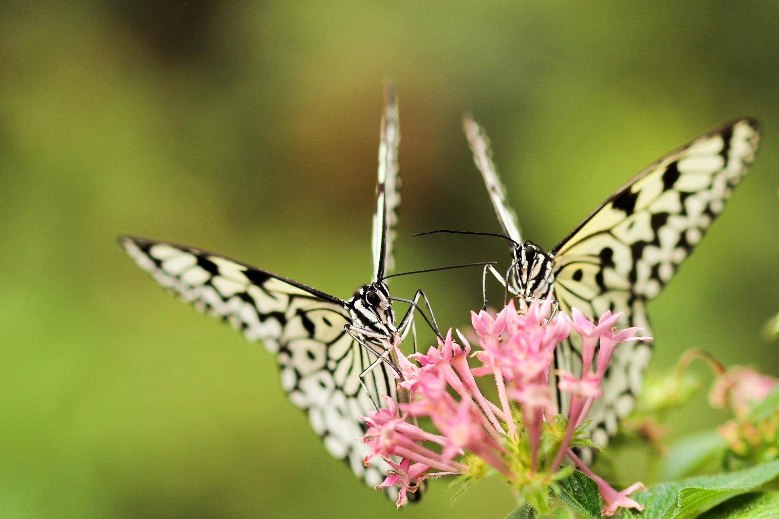 "An up-close photo of two identical butterflies, a metaphor for ""replication"""