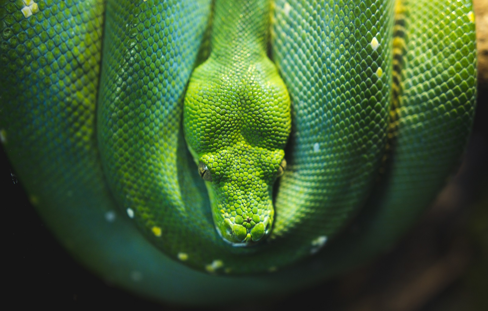 A photo of a green snake