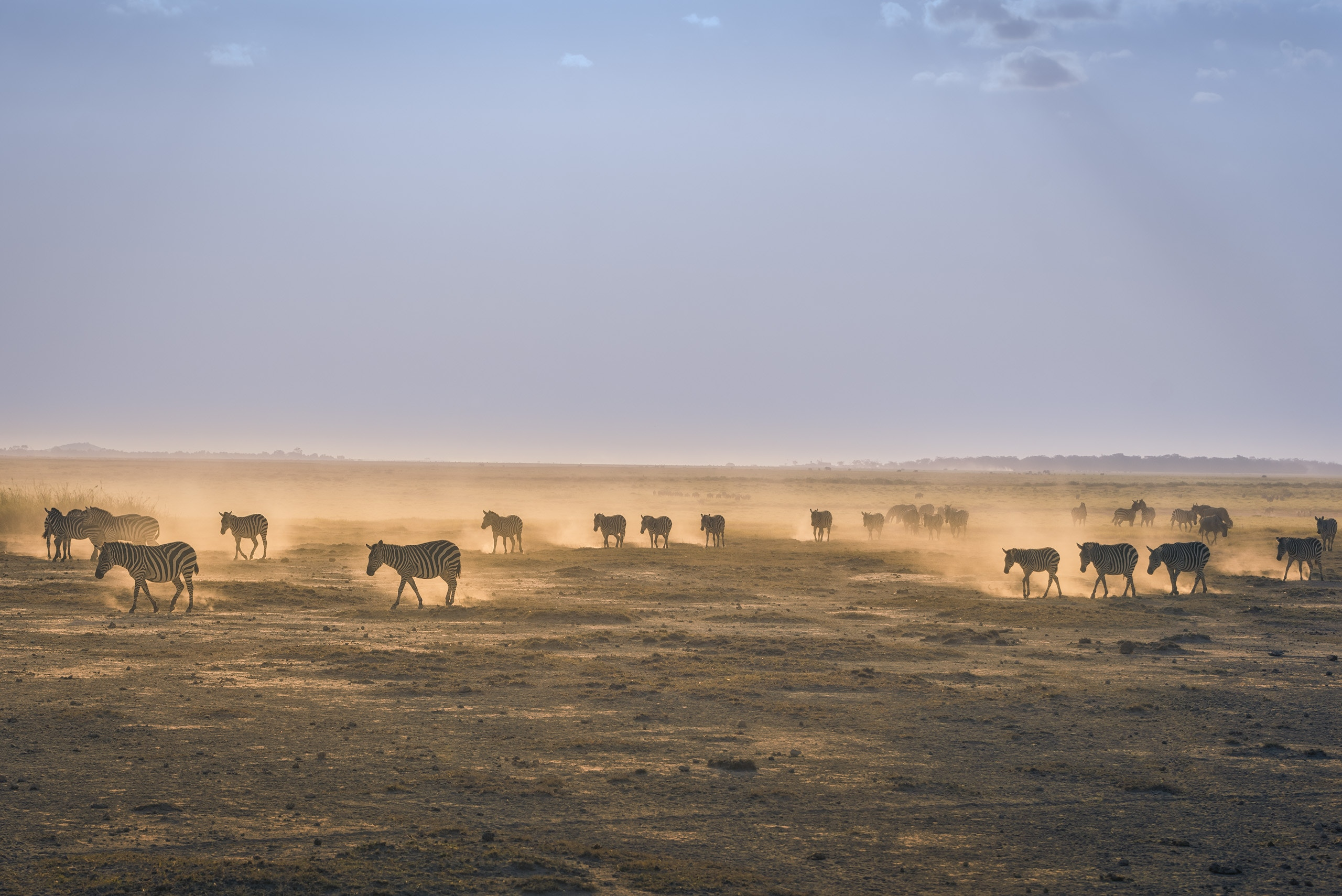 A photo of zebras migration as a metaphor for data migration